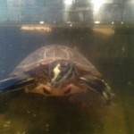 One of the turtles